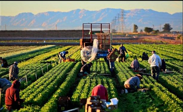 Salgın, Yatırımcıları Tarım Sektörüne Yöneltti